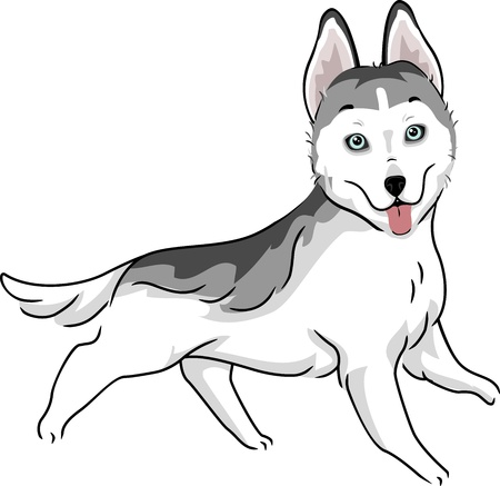 dog sled: Illustration Featuring a Siberian Husky