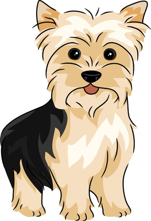 lap dog: Illustration Featuring a Yorkshire Terrier