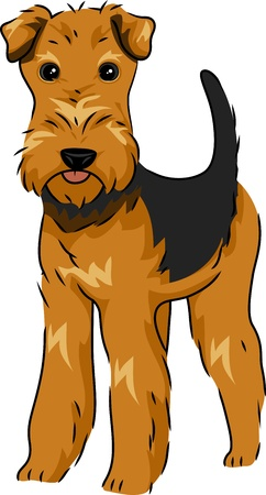 Illustration Featuring a Cute and Playful Airedale Terrier illustration