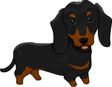 pet breeding: Illustration Featuring a Cute and Friendly Dachshund Stock Photo