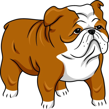 Illustration Featuring a Cute English Bulldog Stock Photo
