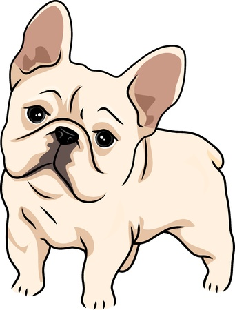 french bulldog: Illustration Featuring a Cute and Curious French Bulldog
