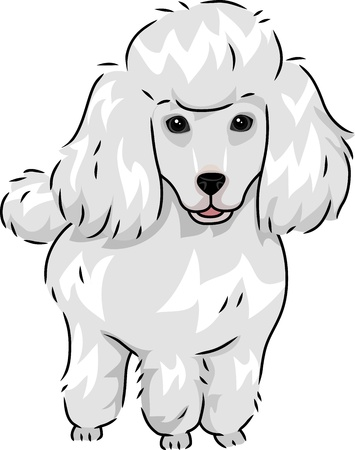 poodle: Illustration Featuring a Cute and Furry Poodle Stock Photo