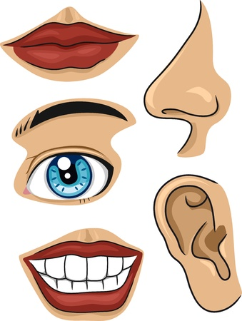 nose cartoon: Illustration of Different Parts of the Face