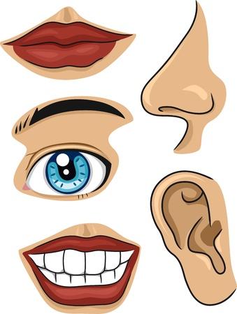ojos caricatura: Ilustraci�n de las diferentes partes de la cara Foto de archivo
