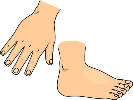 Illustration of Hand and Foot Body Parts illustration