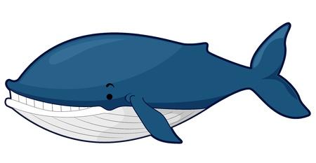 ballena azul: Ilustraci�n de una ballena azul