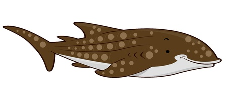 Illustration of a Whale Shark illustration