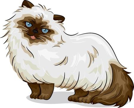 gato caricatura: Ilustración de Himalayan Cat