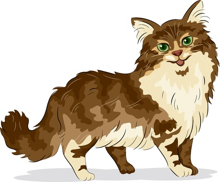 puss: Illustration of Maine Coon Cat