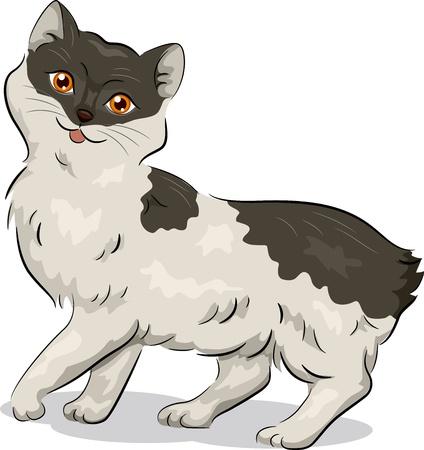 puss: Illustration of a Manx Cat Stock Photo