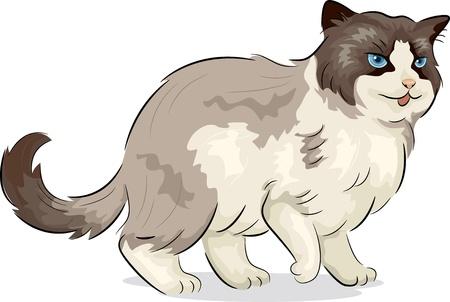 Illustration of a Ragdoll Cat Stock Illustration - 20780217