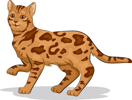 domestic cat: Illustration of a Cute Bengal Cat with One Paw Raised