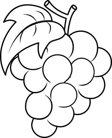 black grape: Coloring Book Illustration Featuring the Outlines of a Bunch of Grapes Stock Photo