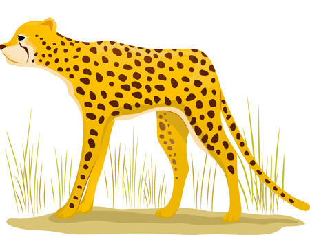 dry grass: Illustration Featuring a Cheetah Standing on a Patch of Dry Grass Stock Photo