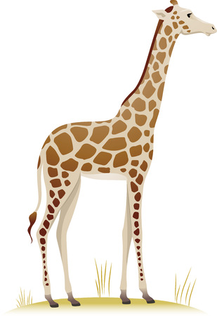 dry grass: Illustration Featuring a Giraffe Standing on a Patch of Dry Grass Stock Photo