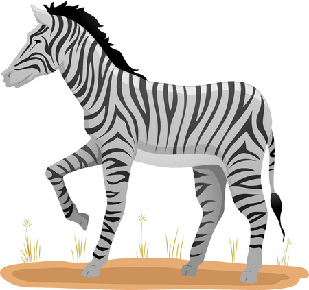 dry grass: Illustration of a Zebra Standing on a Patch of Dry Grass Stock Photo
