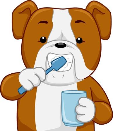Illustration of a Bull Dog Brushing its Teeth 일러스트