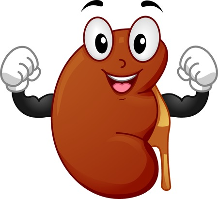 Mascot Illustration Featuring a Strong Kidney Flexing its Muscles Vectores