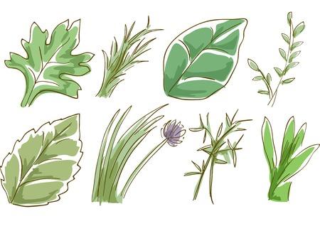 cebollin: Ilustración incompleta Con Diferentes Hierbas