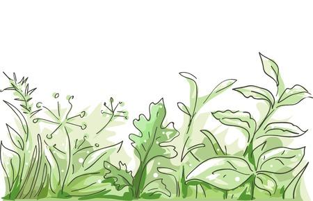 Border Illustratie Met verschillende kruiden