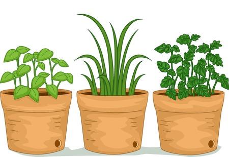 urban gardening: Illustration Featuring Potted Herbs Illustration