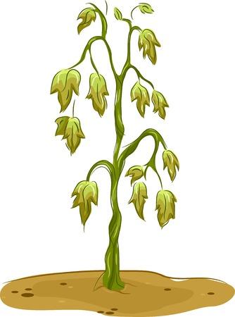 sequias: Ilustración que ofrece un Marchita Vectores