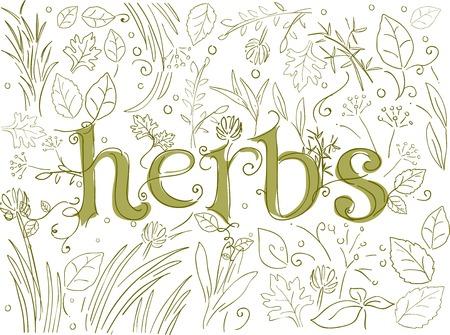 plantas medicinales: Ilustraci�n Doodle Con Diferentes Hierbas