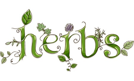 thyme: Text Illustration Featuring the Word Herbs Done in Ornate Lettering