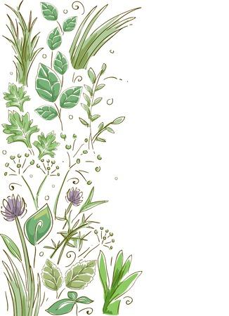 Border Illustration Featuring Common Herbs