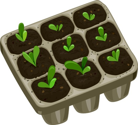 Illustration Featuring a Seedling Tray Filled with Saplings Illustration