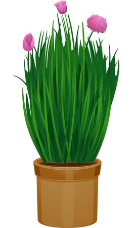 chives: Illustration Featuring Potted Chives