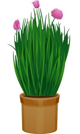 cebollin: Ilustración con maceta Cebollino