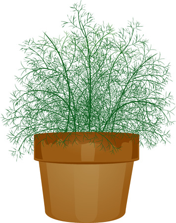 dill: Illustration of a Potted Dill Leaves