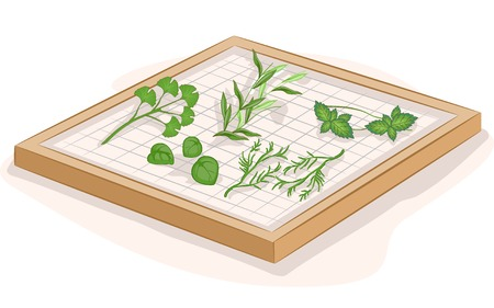 dried: Illustration Featuring Herbs Being Dried