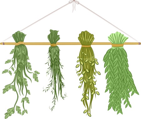 drying: Illustration Featuring Herbs Being Dried
