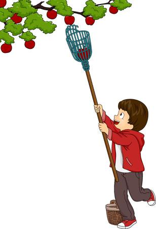 Illustration Doté d'un Boy Picking Fruits aide d'un cueilleur de fruits Vecteurs