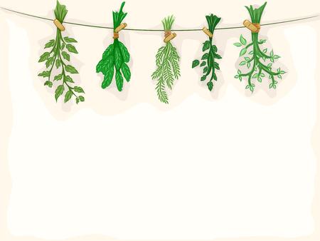 erbe aromatiche: Sfondo Illustrazione Con Erbe in essiccazione