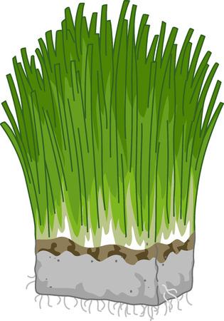 clip art wheat: Illustration Featuring a Block of Wheatgrass