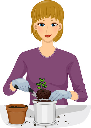 plant pot: Illustration of a Woman Transferring a Plant From One Pot to Another Stock Photo