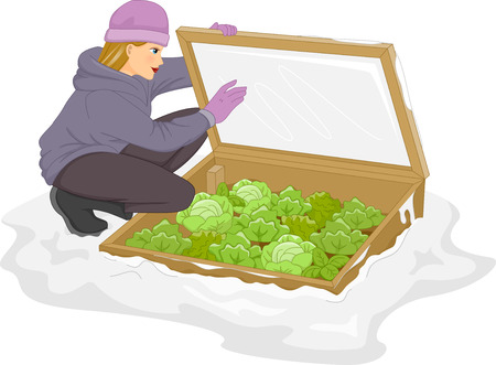 Illustration of a Woman Checking Her Plants Inside the Cold Frame illustration