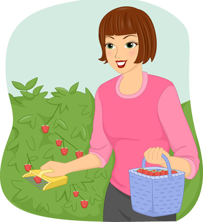 gather: Illustration of a Woman Using a Fruit Picker to Gather Berries Stock Photo