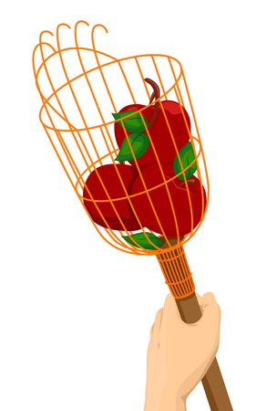 picker: Illustration of a Hand Holding a Fruit Picker With Apples in It Stock Photo