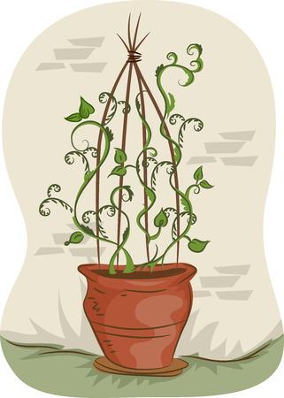 indoor garden: Illustration of Vines Climbing Up a Teepee Trellis