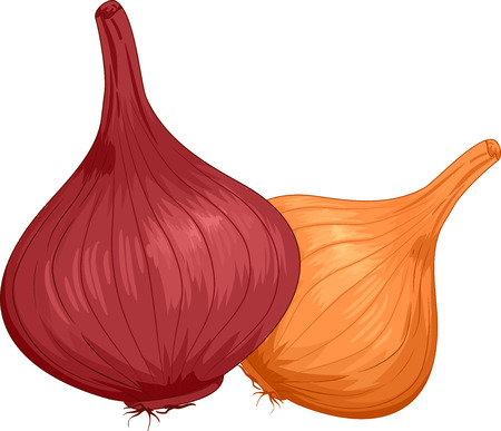onions: Illustration of a Pair of Onions With Different Colors