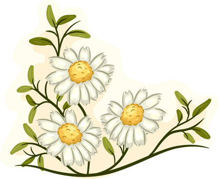 bloom: Illustration of a Bunch of Chamomile Flowers in Full Bloom Stock Photo