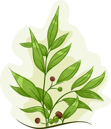 Tea tree: Illustration of a Tea Tree Plant with Healthy Leaves and Fruits