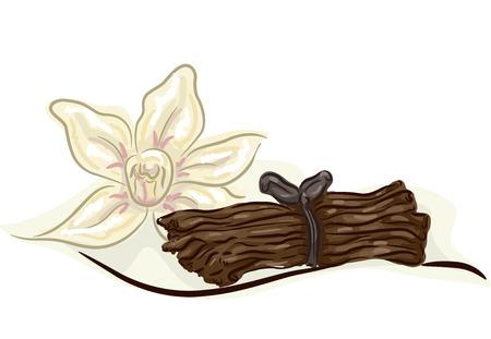 flor de vainilla: Ilustraci�n de un paquete de vainilla Tallos con una flor de vainilla al lado de �l Foto de archivo