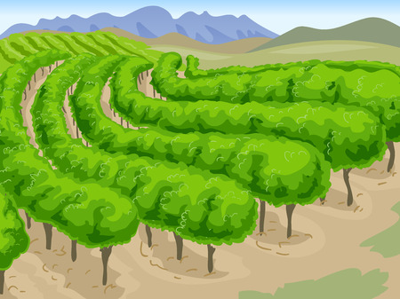 vineyard: Scenic Illustration of a Long Stretch of Vineyard with Mountains in the Background