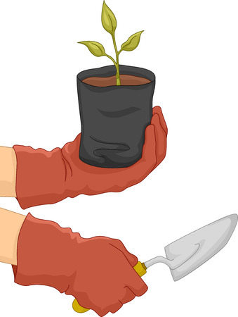 sapling: Illustration of a Gardener Holding a Sapling in One Hand and a Spade in the Other